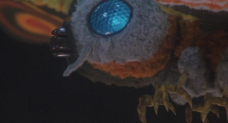 gm_moth4