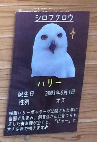 td_fukuro_k_r