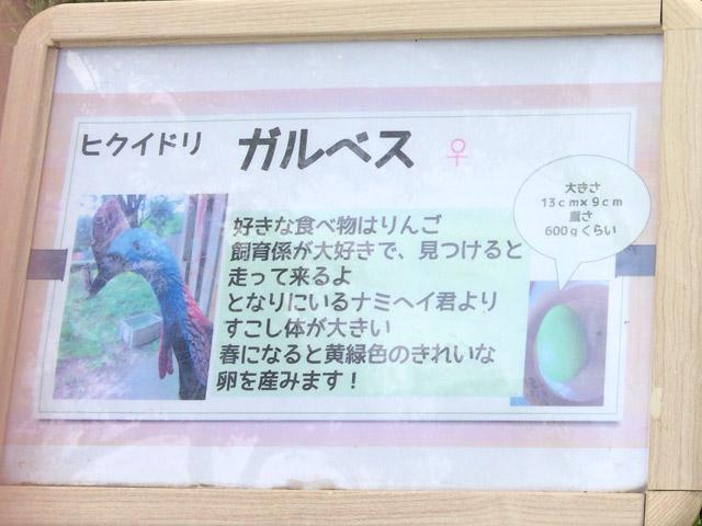 td_hikuidori_k2