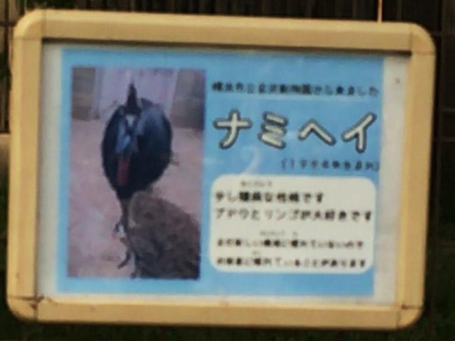 td_hikuidori_k_namihei