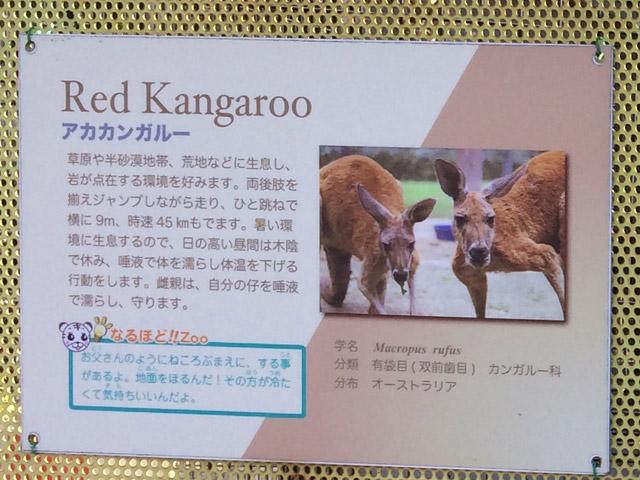 td_kang_k2